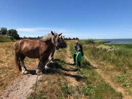 Pferde an der Ostsee auf Fyn in Dänemark