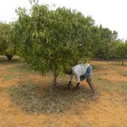 Stadt Land Camp - CO2 Kompensation - Aufforstungsprojekt Bagepalli in Indien 3
