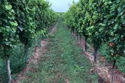 tart unserer Elternzeittour in der Pfalz - inmitten der Weinreben