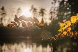 Herbstleuchten im Svartedalen Naturreservat