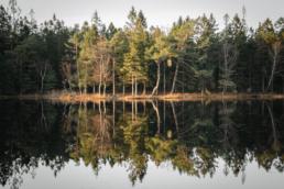 Postkartenmotive im Svartedalen Naturreservat - Schweden pur